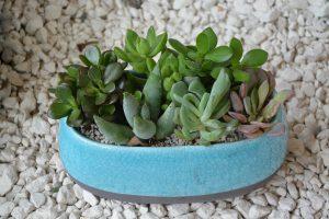 Plante grasse déco intérieur