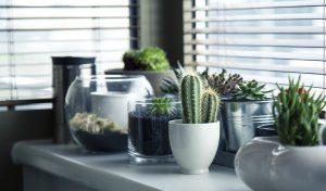 Plante grasse plante d'intérieur