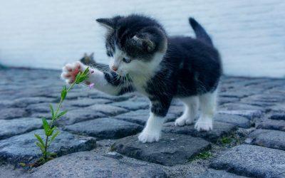 Meilleurs litières pour chats
