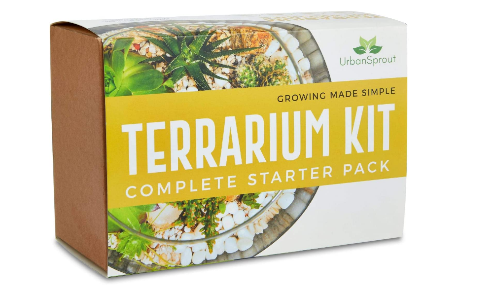 Kit terrarium DIY